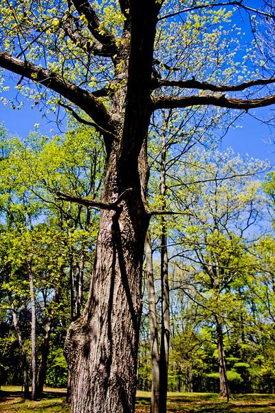 Richfield County Park in Michigan 2