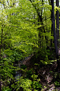 18 Stepping Stone Falls Flint Michigan