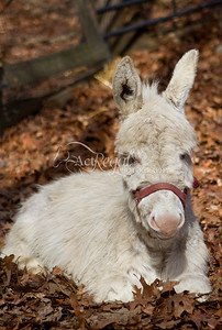 Beech Brook Farm Equine Rescue
