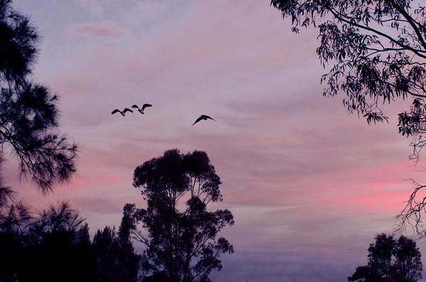 Sky over Hunter Valley