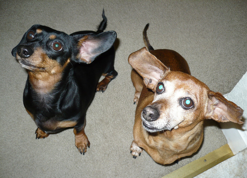Jan 15:  Roxy and Ruby - they always sit pretty for treats