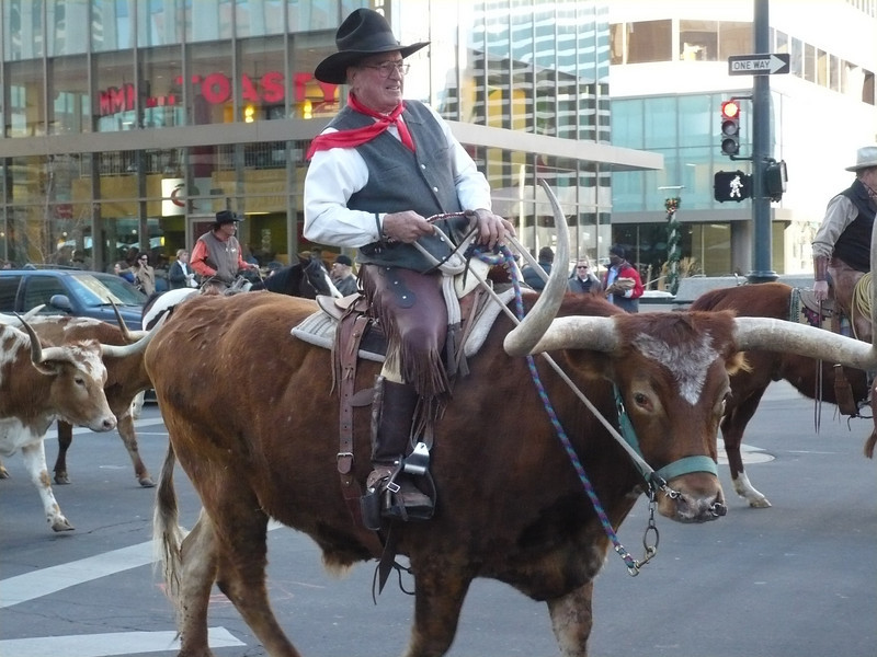 Jan 12; Denver's Annual Stock Show Parade - it was a beautiful 58 degrees