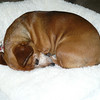 Jan 17:  Ruby sleeping in her bed.  Looks like a cinnamon bun when she rolls up like this