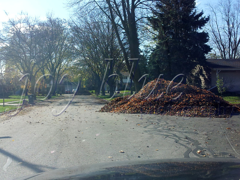 <b>Day 363—29 October 2012 Blocked!</b>  DH wasn't the only busy bee this weekend. Once the leaf sweeper came through, practically every intersection throughout the neighborhood was more than 50% blocked by leaf mountains. Oy! [I apologize for the severely lacking shot—I was on the run all day, getting things done and making big plans.]