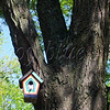 <b>Day 189—8 May 2012 It's for the birds!</b>  I've been enjoying this adorable birdhouse on my walk route. I keep meaning to ask my friend/neighbor Mary for its story; but, I always forget by the time I get home (and get busy with the daily minutiae). If I ever find out, I'll revise this entry. [Here's the scoop: Mary reports that Bradley (Adam's peer) made the birdhouse when he was 5-ish. It's a particular favorite of hers, too. Great minds think alike!]