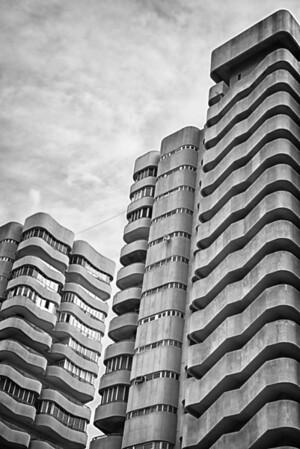 301/365 - The Urban Jungle