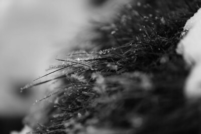 361/365 - The Winter's Kiss