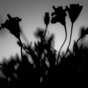 144/365 - The Secret Garden