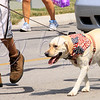 <b>Day 242—30 June 2012 Star-spangled pup</b>  This parade participant was so adorable (and engaging), that I have no idea what group s/he represents.