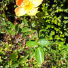 <b>Day 309—5 September 2012 Orange crush!</b>  This little darling decorates my front yard. What's not to love?