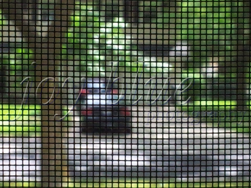 <b>Day 211—30 May 2012 Clean screen</b>  DH recently swapped the screen door for the storm door, and Sylvia super-cleaned the screen yesterday. I had to record her stellar work.