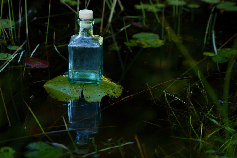Feeling Froggy<br /> <br /> 218/365