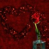 Happy Valentines Day<br /> <br /> 144/365