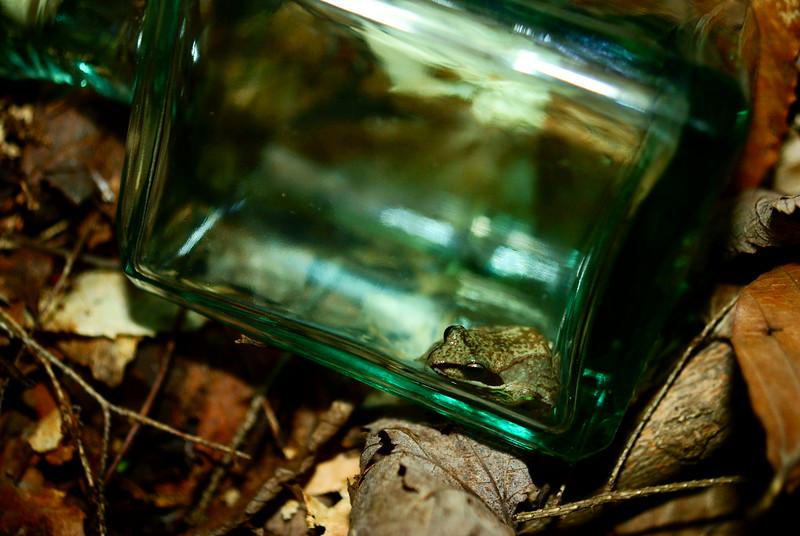 All bottled up<br /> <br /> 169/365