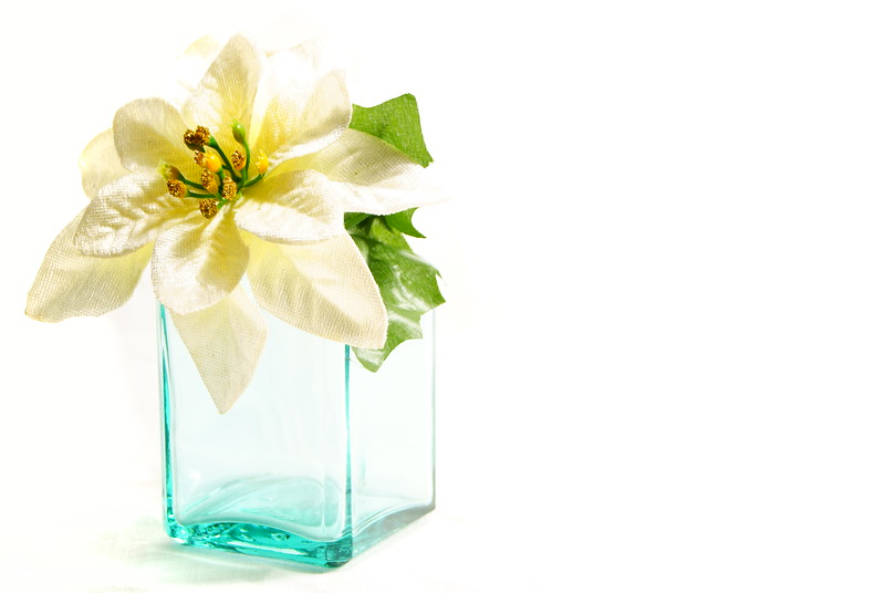 Poinsettia in High Key<br /> <br /> 68/365