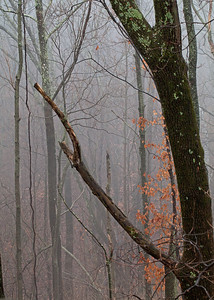 Backyard fog