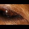 Golden Eye - 013/365