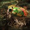 Christmas nest eggs - 004/365