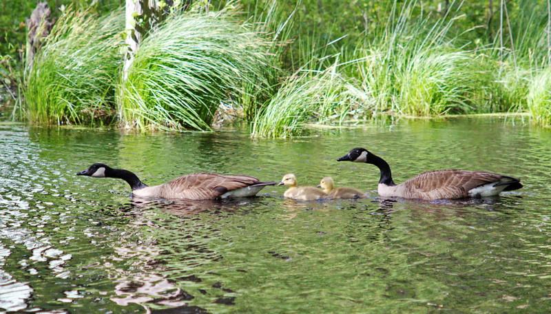Family Swim - 129/365