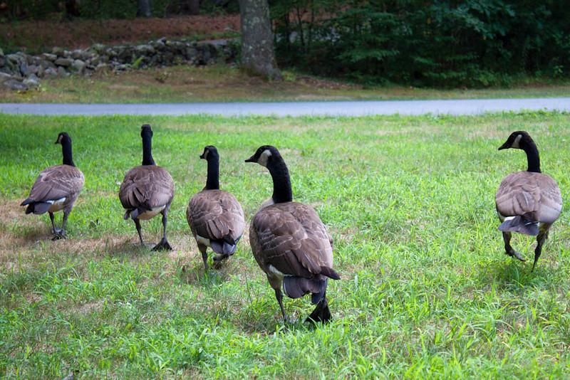 Wild Goose Chase - 209/365
