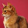 Royal Feline - 107/365