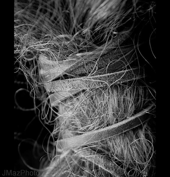 Ponytail - 309/365