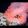 Undersea Hideout - 326/365