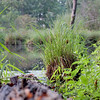 Grass in the Creek - 245/365