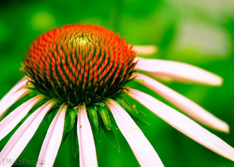 Slender Petals - 175/365