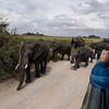 Third day of Mentor Trek Africa, Maasai village and afternoon in Serengeti National Park. Overnight at Sopa Serengeti.<br /> (Photo by Reed Hoffmann on 6/20/16)<br /> <br /> NIKON D750, mode, white balance of SUNNY, ISO 160, 1/800 at f/6.3, EV 0.0, Nikkor lens at 24mm, Picture Control set to STANDARD.<br /> Photo copyright Reed Hoffmann.