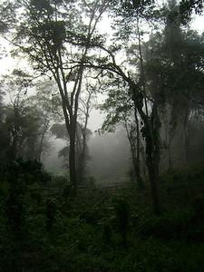 angola-trees
