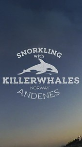 Snorkeling with Killerwhales