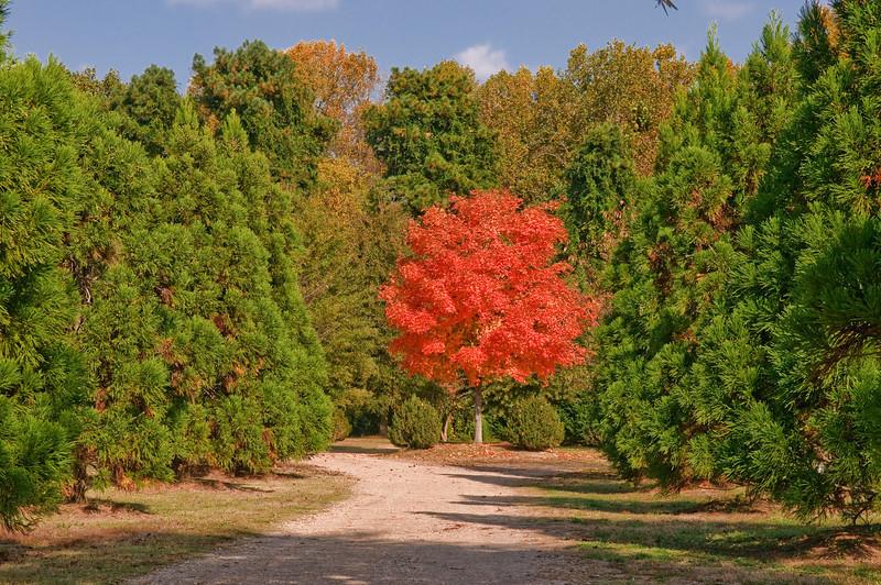 DSC_9513 Historic Oakwood Cemetery Raleigh NC