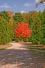 DSC_9512 Historic Oakwood Cemetery Raleigh NC