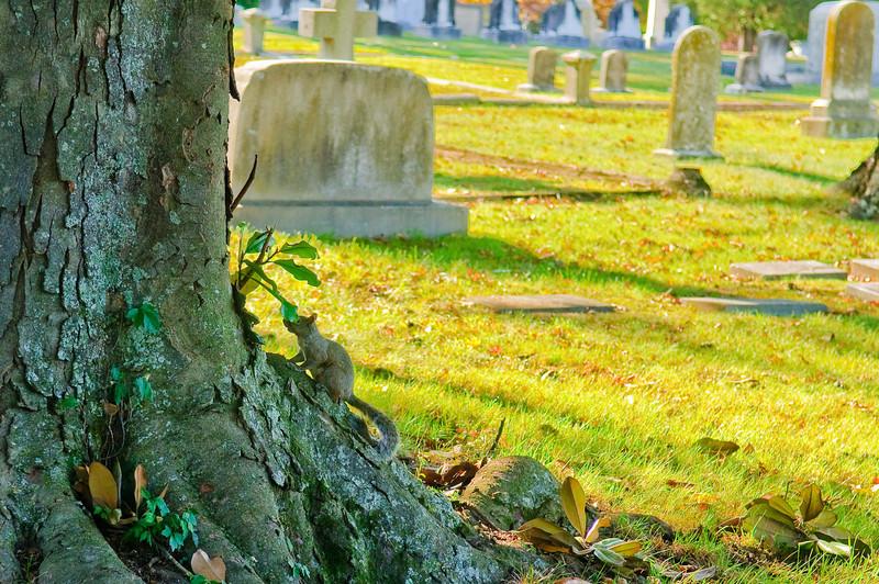 DSC_8740 Historic Oakwood Cemetery Raleigh NC