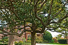 DSC_9558 Governor's Mansion Tree