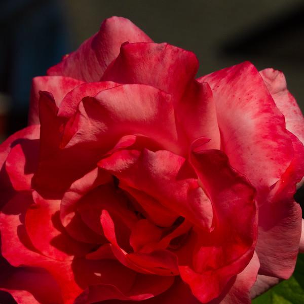 Flower-3682