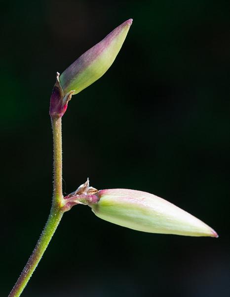 Flower-3650