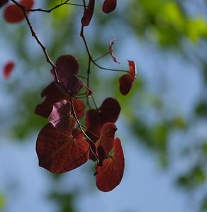 tree Jewels