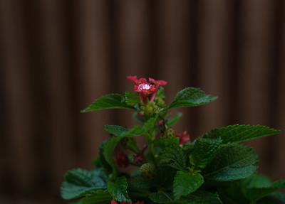 diamond on flower