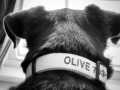 O is for Olive