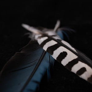 crossed feathers