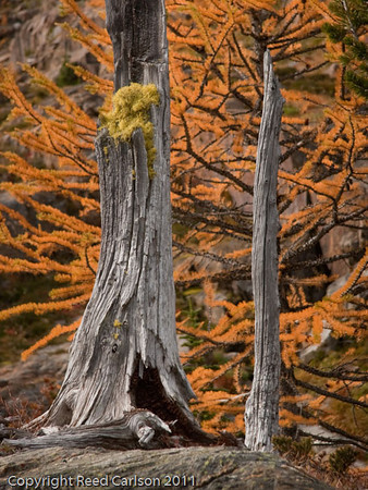 Conversation of Larches