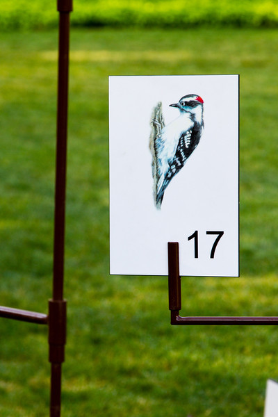 Woodpecker 17
