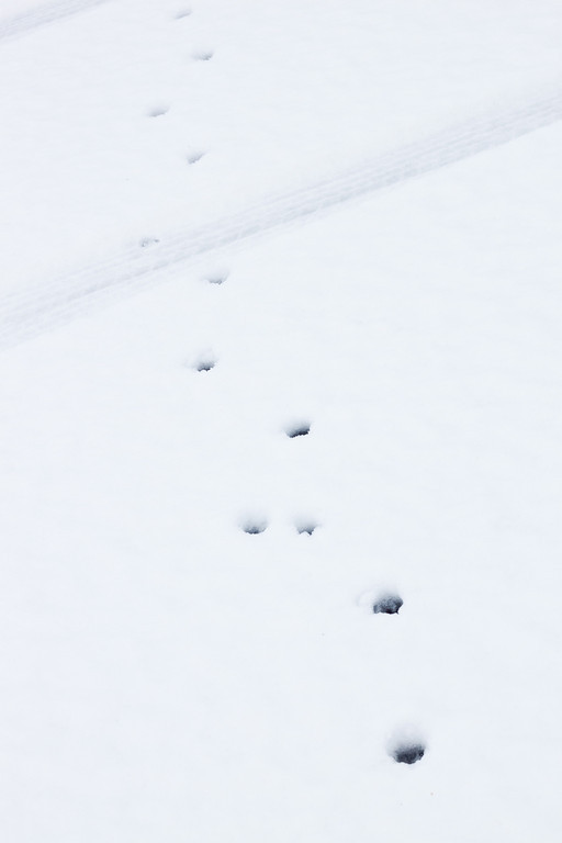 Day 066 cat paw prints across my driveway, you can see the snow is not very deep