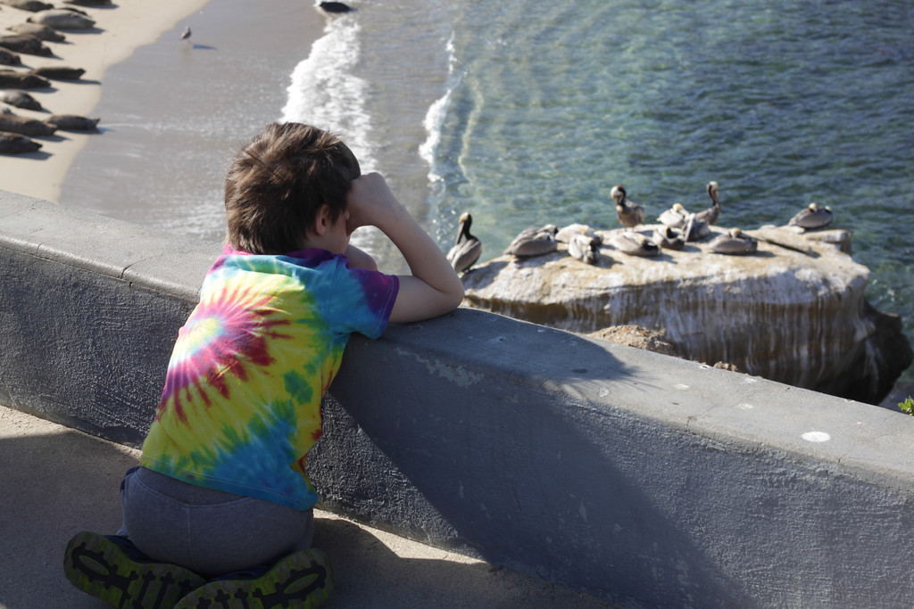 Day 060 Watching Seals and Pelicans | Ian was tired but he was interested in seeing the animals that have taken over what used to be called The Children's Cove in La Jolla. Just to the left of the frame, the beach is full of lounging seals and you can see the rock has become a favorite place for pelicans.