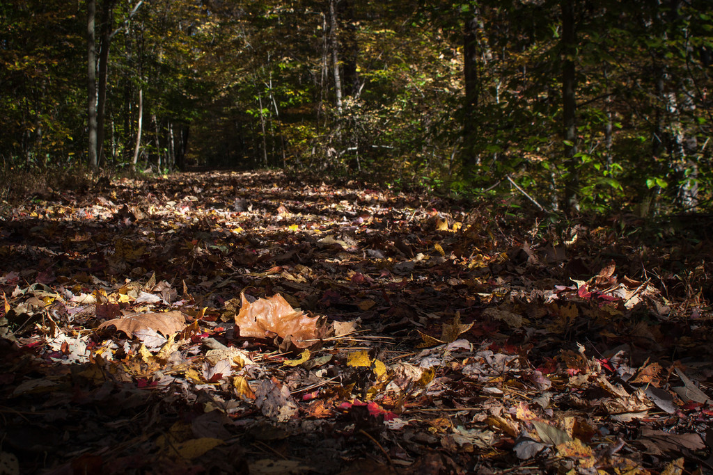 Leaf Strewn Trail