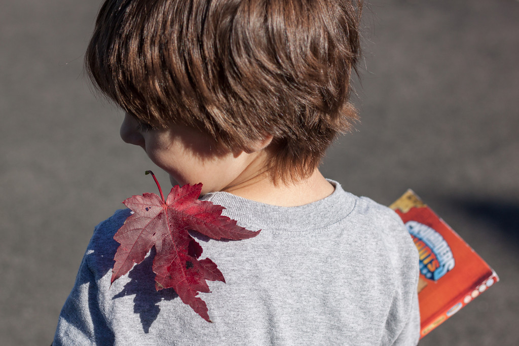 Autumn is Falling