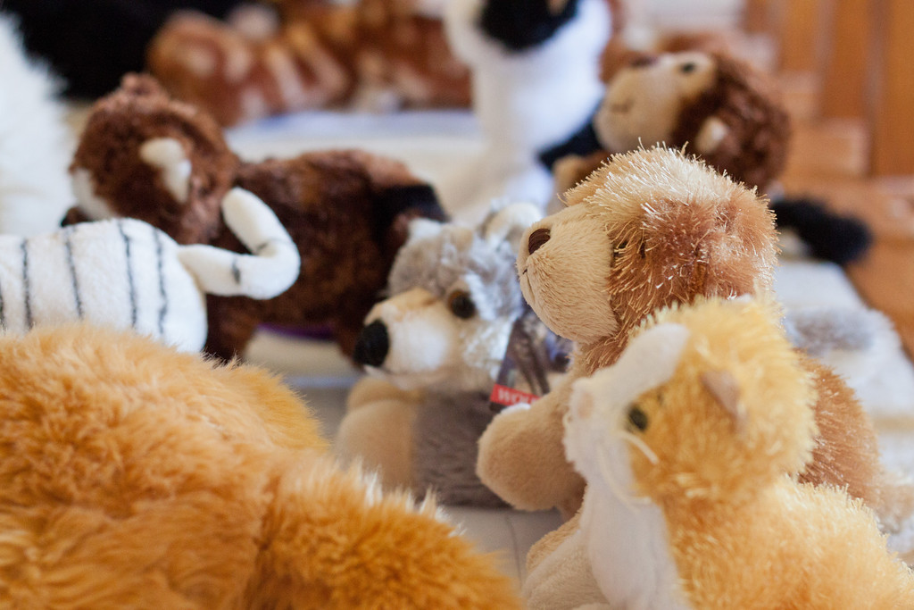 """Week 05 {animals} <br /> <br /> The only live animals I saw this week are birds and squirrels, too fast or faraway to photograph, so stuffed animals will have to do. These are my daughter's stuffed animals, all lined up in the hall, sitting on sheets of paper on which she has written names. She has named each one of them after a character in Harry Potter.<br /> <br /> Go on the blog circle at <a href=""""http://michelepixels.com/2013/02/03/project-52-week-05-animals/"""">http://michelepixels.com/2013/02/03/project-52-week-05-animals/</a>"""