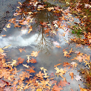 Autumny Puddle Reflections INSTAGRAMMED